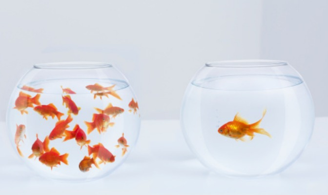 Goldfish in a bowl